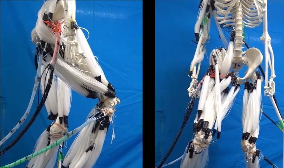 Японские учёные создали искусственные поливолокнистые мышцы