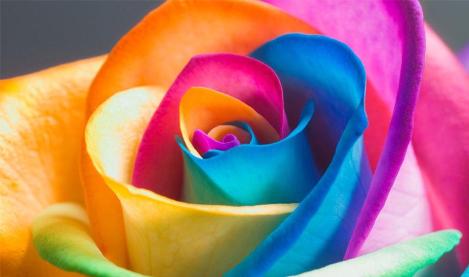 Розы — электрические роботы