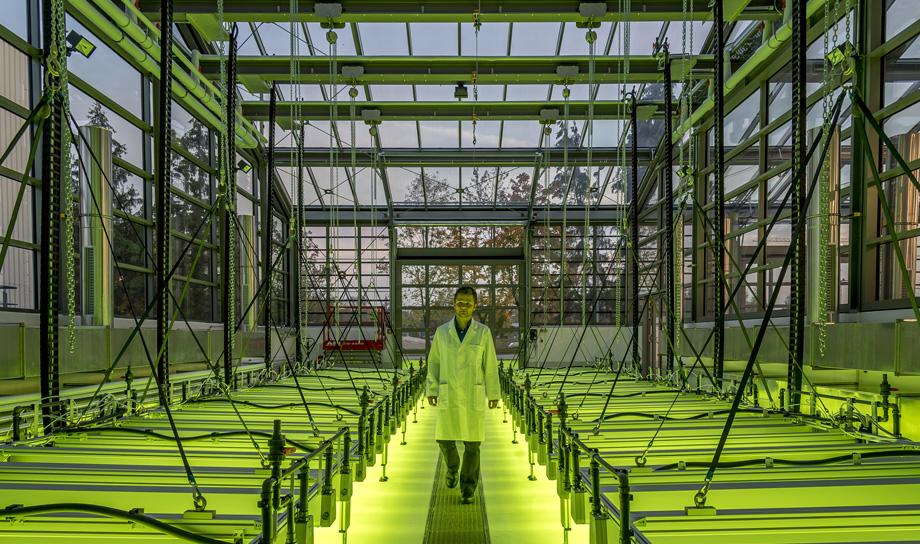 Реактивные самолёты компании Airbus будут летать на биотопливе из водорослей