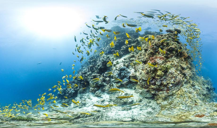 Внук Жака-Ива Кусто создаёт коралловые рифы с помощью 3D-принтера
